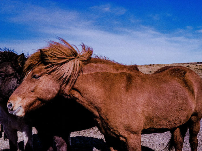 Horse Standing Against Sky