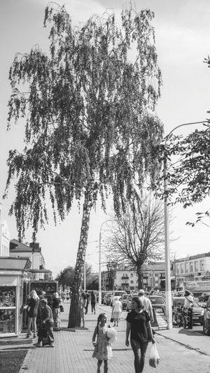 Blackandwhite Monochrome Photography Streetphotography Street Street Photography Streetphoto_bw Tree City Sky Built Structure Building Exterior Street Scene