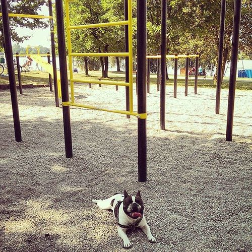 Best friend + the best place on Earth Friends Frenchbulldog Dogstagram Dogsofinstagram Street Workout Calisthenics Barbrothers Fitness Fitspo Fitfam Lifeisgood