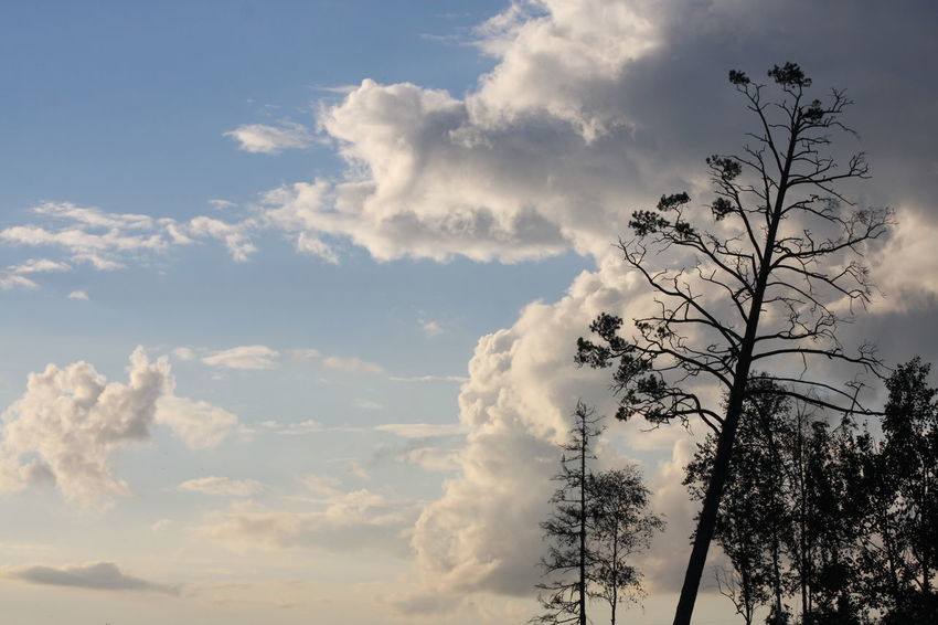 Beauty In Nature Cloud Cloud - Sky Growth Nature No People Sky Tree Wildlife Landscape Nature_collection Landscape_photography Landscape_Collection Clouds And Sky Clouds Cloudy Sky
