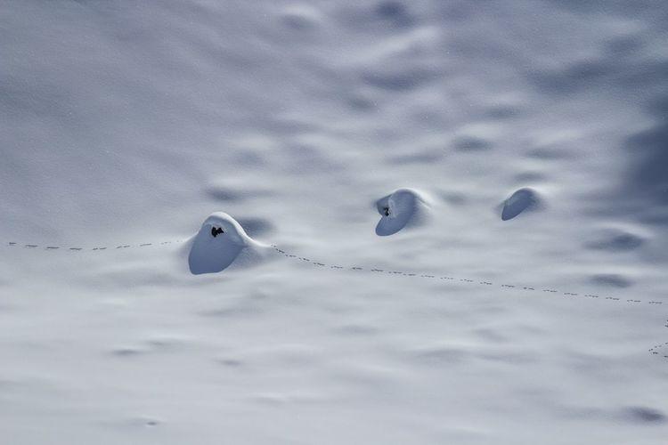 Close-up of bird in snow