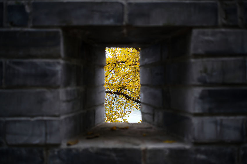 Yellow ginko leaves seen through hole on old wall See Through Hole Wall Great Wall Ruins Season  Emotional Ginko Ginko Leaves Yellow Leaves Branches darkness and light Brightness Brightness Vs. Darkness Brightness In Darkness Bricks