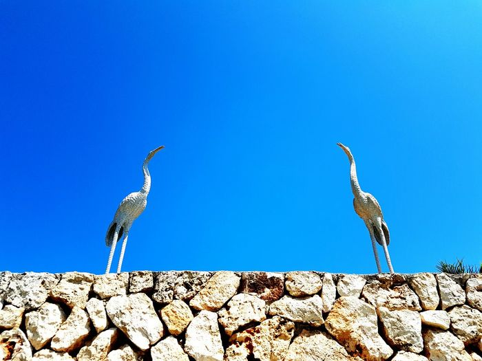 Birds Decoration Outdoors Blue Clear Sky Copy Space Stone Wall Day No People Two Is Better Than One Two Animals Two Of A Kind Check This Out! Walking Around Taking Pictures Samsung Galaxy S7 Edge GalaxyS7Edge Samsungphotography Smartphonephotography IMography Taking Photos Hello World