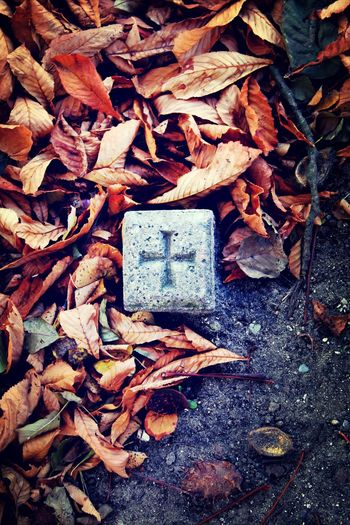 Old Stone Leaves Cross Symbol