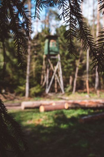 Tree No People Day Nature Selective Focus Close-up Growth Focus On Foreground Outdoors Beauty In Nature Spruce Tree