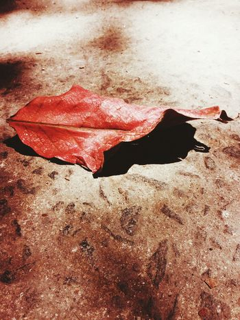 You are still beautiful even when you get old. Leaf Dryleaf Photo Photography VSCO Minimal Vscocam Minimalism Minimalist Minimalism Photography EyeEmNewHere P.S. I will make other account for my mother and I am the one who will handle. The pictures that I will post there are pictures that I also took. The purpose of it is for me to join market, kos I'm still minor. My mother approved it.