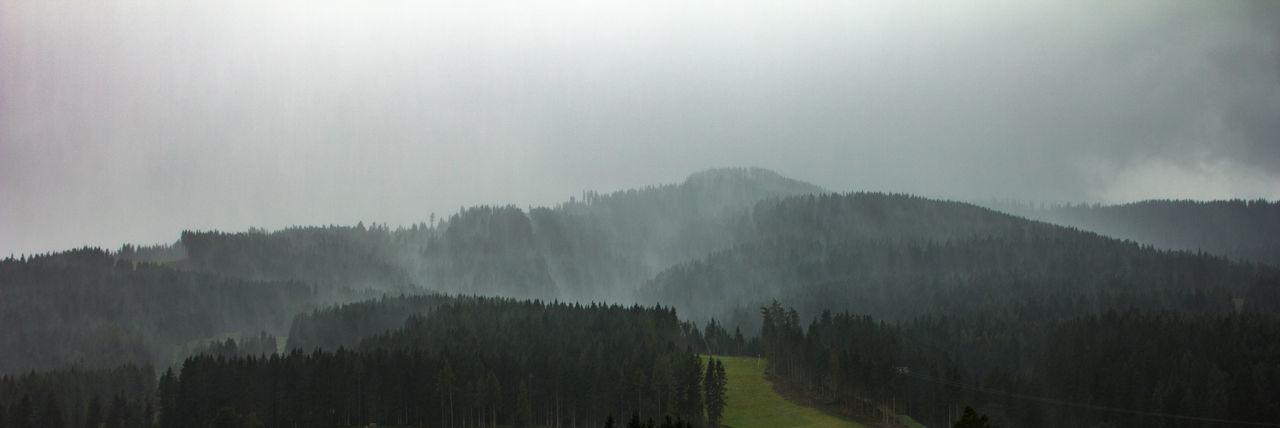 Tree Fog Beauty