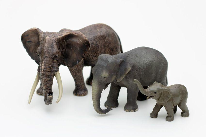Schleichtiere elephants African Elephant Childrens Toys Hartgummi Spielzeug Schleich Schleich Animals Schleich Tiere Schleichtiere Schleichtiere Elefant Schleichtiere Elefanten Schleichtiere Elephants Schleichtiere Spielzeug Schleichtiere Toys Spielzeug Spielzeug Tiere Spielzeugfiguren Spielzeugfotografie Spielzeugtiere Toyphotography Toys