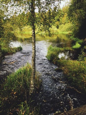 River in the forest Nature Tree Water Tranquil Scene Tranquility Beauty In Nature Growth River No People Scenics Landscape Forest Day Green Color Trees