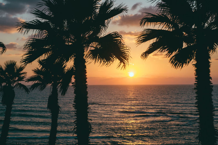 Sunset in Bat Yam, Tel Aviv Sunset Water Sky Beauty In Nature Palm Tree Tree Scenics - Nature Sea Tropical Climate Silhouette Tranquility Tranquil Scene Horizon Horizon Over Water Nature Orange Color Plant Sun Idyllic No People Outdoors Tropical Tree