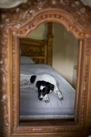 Bali Bali Dogs Copy Space Pet Portraits Animal Themes Dog Domestic Animals Mixed Breed Mutt Window Window Frame