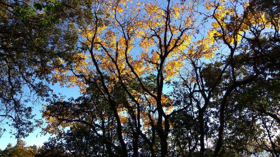 Tree Low Angle View Nature Growth Day Branch Tranquility Forest Outdoors Scenics Sky