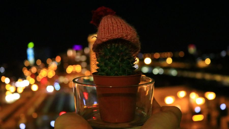 Close-up of person holding potted plant in city against sky at night