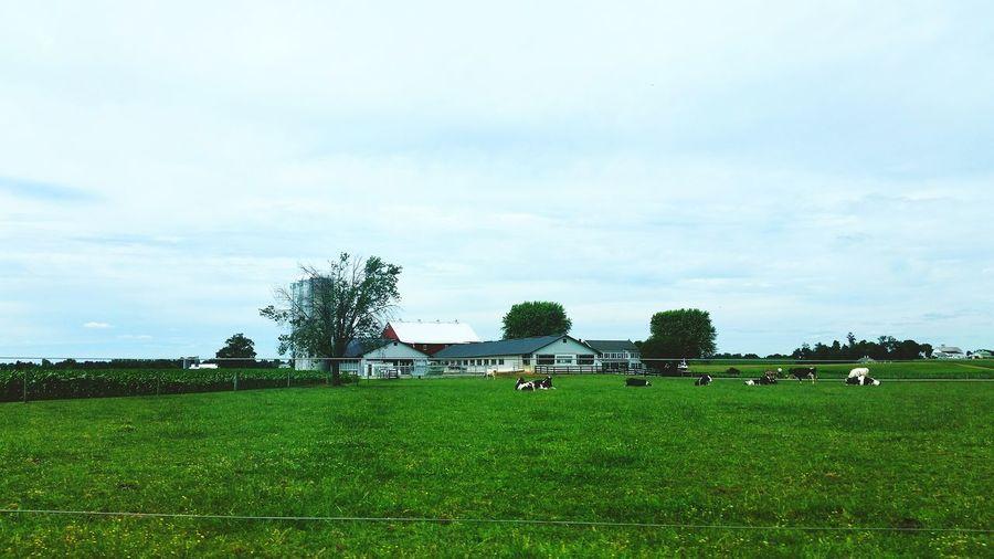 Farm Farmland