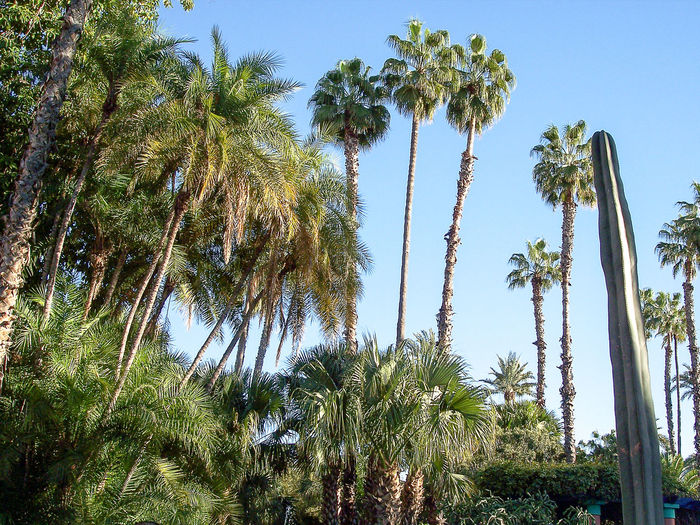 Blue Sky Majorelle Marrakech Morocco Naturelovers Palm Trees Travel Tropical Trees