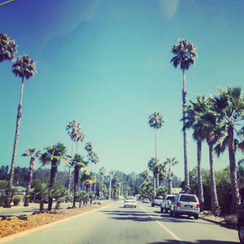 Losangeles StreetsOfLA California Palmtrees Palmenstrasse California Highway Santa Cruz USAtrip EyeEm Gallery Roadtrippin'