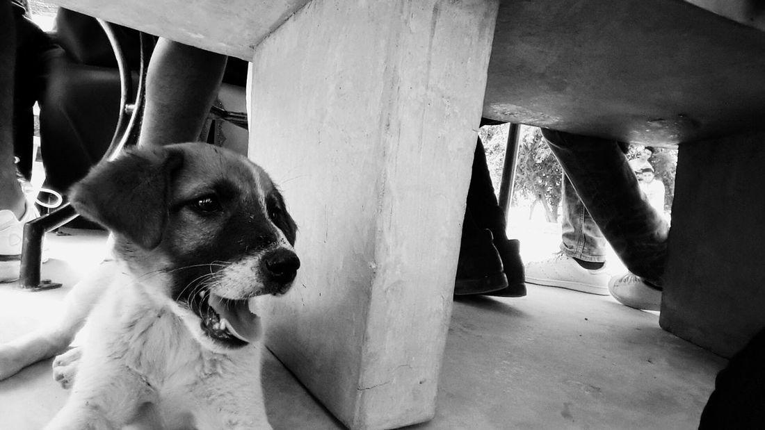 Animal Themes Pets One Animal Dog Domestic Animals No People Morocco 🇲🇦 اغادير Samsung Galaxy S5 Samsungphotography