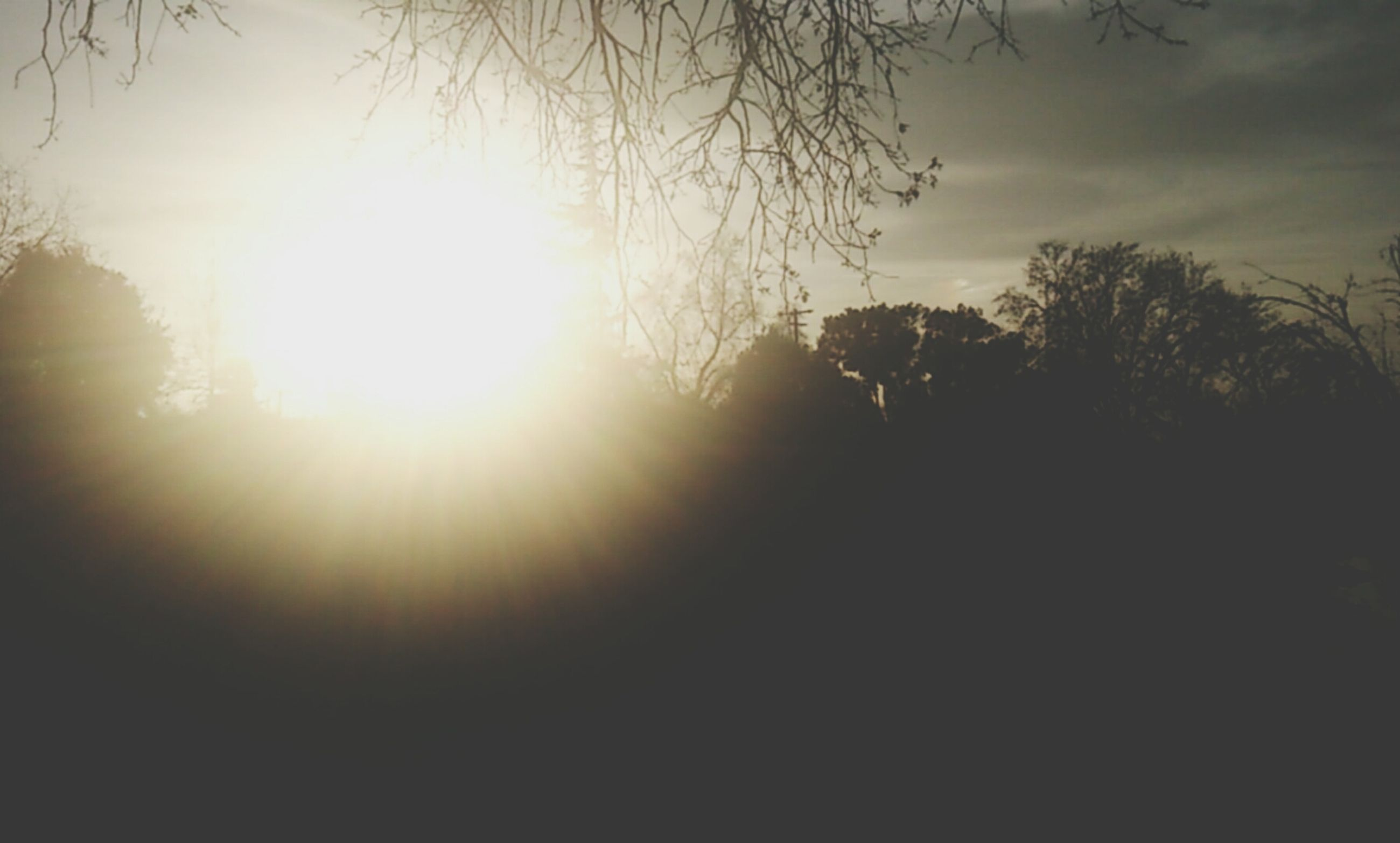 sun, tree, silhouette, sunbeam, sunlight, sky, sunset, tranquility, lens flare, nature, tranquil scene, beauty in nature, scenics, low angle view, branch, bare tree, bright, outdoors, growth, no people