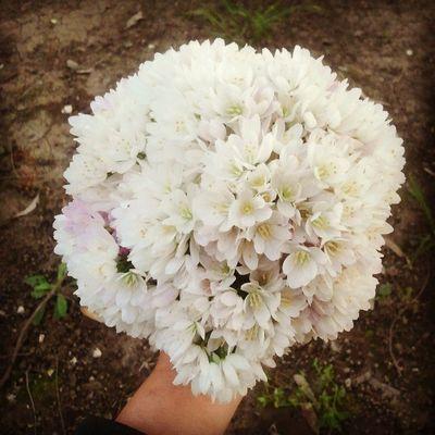 Nardos, una de mis flores favoritas.