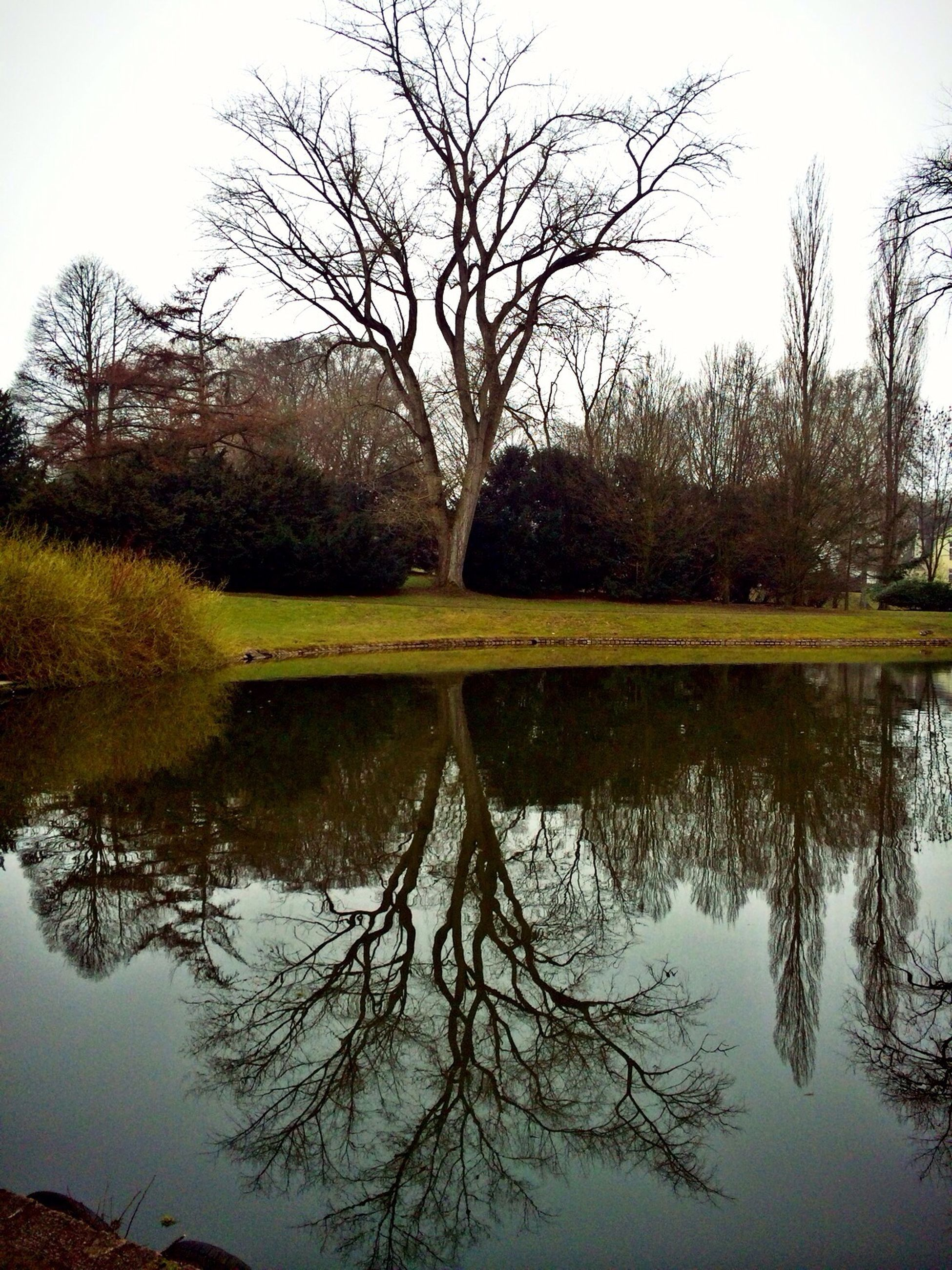tree, reflection, water, lake, tranquility, tranquil scene, scenics, beauty in nature, bare tree, waterfront, nature, clear sky, branch, standing water, sky, growth, idyllic, day, calm, outdoors