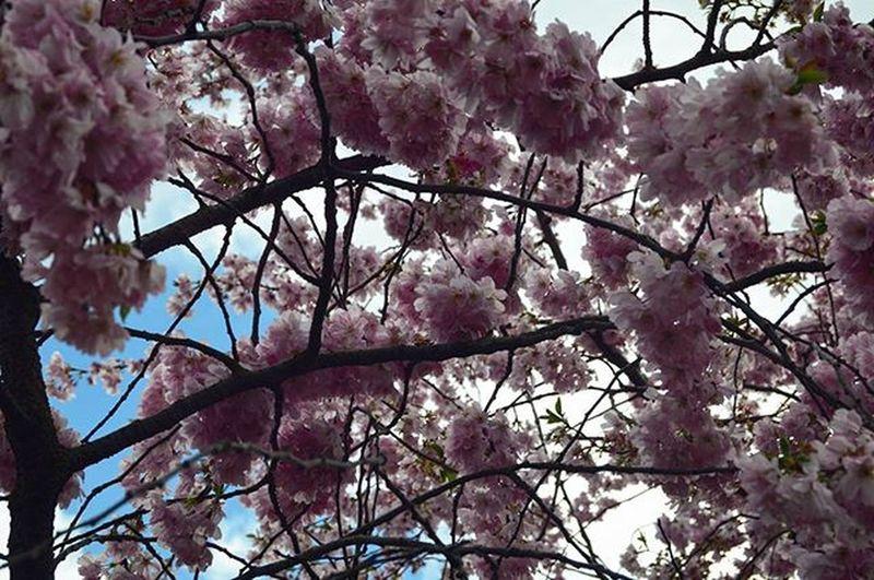 Spring spring spring Flowers Tree Park Nordpark Spring Springingermany Travel Traveltheworld Düsseldorf Dusseldorf_de Ddorfcity Ddorf NRW Nordrheinwestfallen Explorenewplaces City Explore Travelgram Instatravel