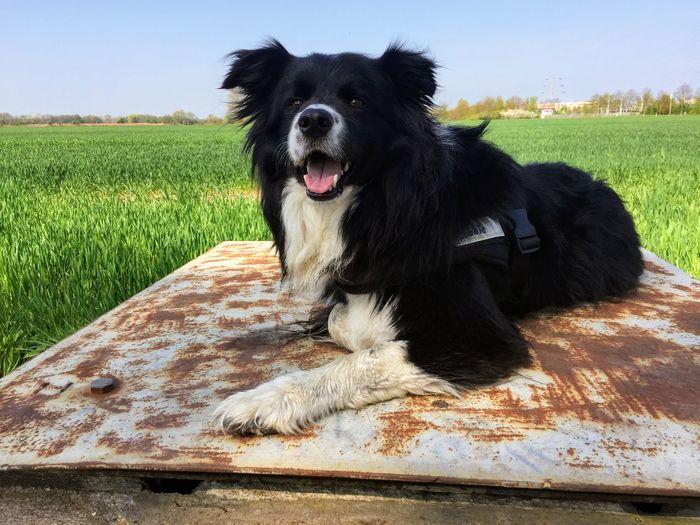One Animal Dog Mammal Canine Domestic Pets Domestic Animals