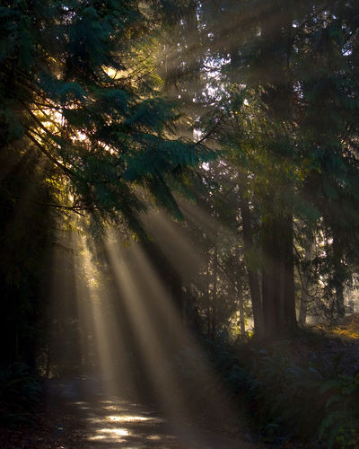 Early morning fog with sunburst. Trees Beauty In Nature Day Driveway Fog Foggy Morning Forest Landscape Nature No People Outdoors Sunbeam Sunlight Tranquil Scene Tranquility Tree