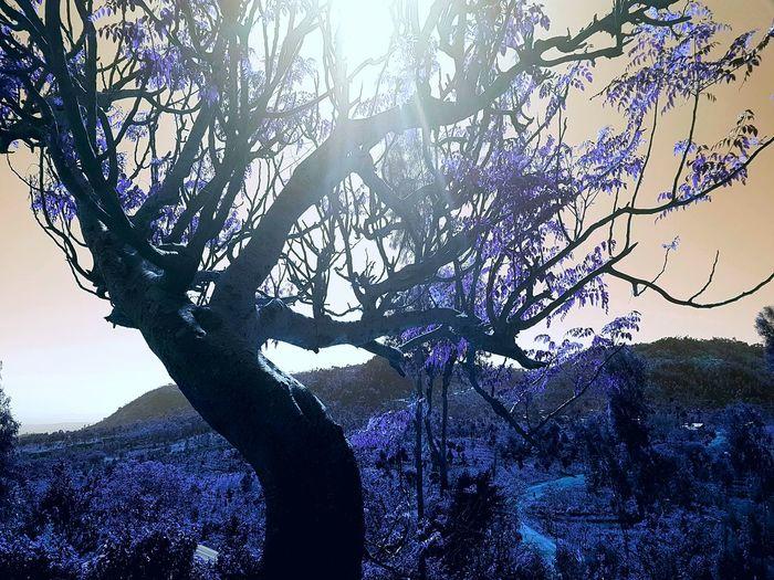 Travelpgotography Travelling Ethiopia Konso Konsovillage Photography Purplelife Purple Trees Lanscape
