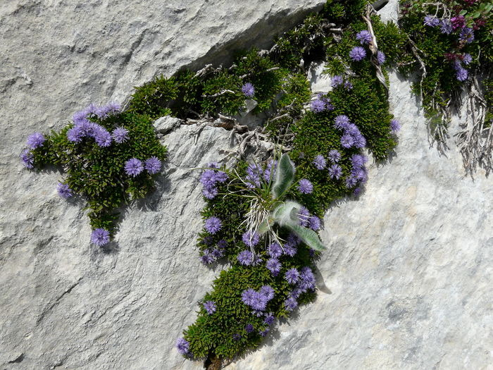 High angle view of purple flowering plants on rock
