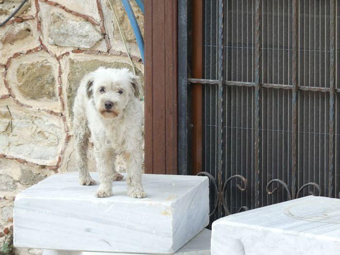 Portrait of dog sitting against wall