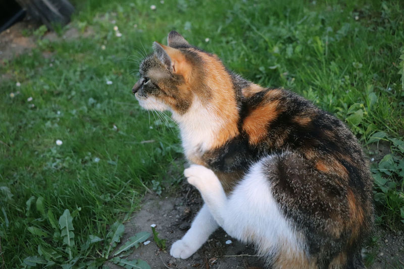 View of cat sitting on grass