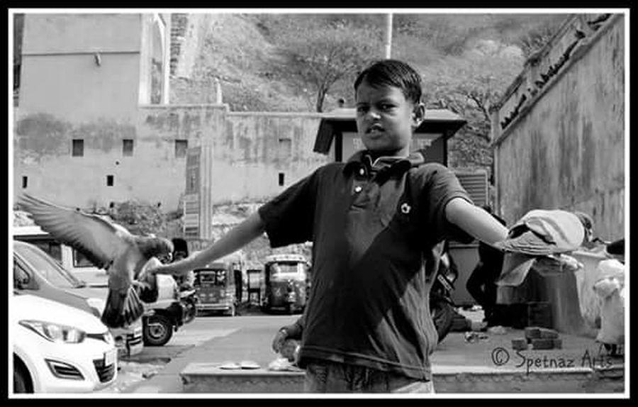 Pigeon Boy India Rajasthan Jaipur Amerfortjaipur Pigeons Food