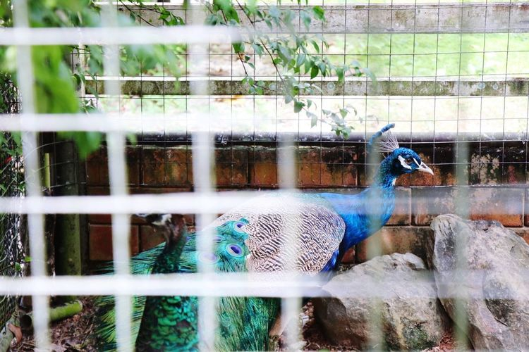 View of parrot in cage at zoo