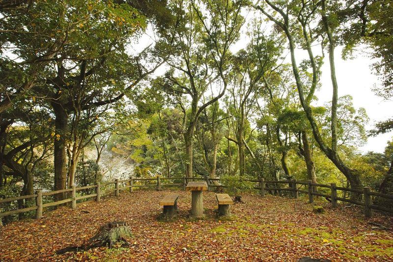 Simple Place Tree Nature Growth Tranquility No People Beauty In Nature Outdoors Tranquil Scene Green Color Forest Scenics Day Simple STAND Stayed