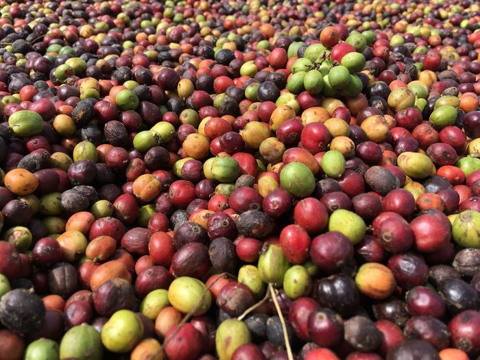 Coffeebean Coffee Beans Coffee Fruit Food And Drink Full Frame Healthy Eating Food Backgrounds Freshness No People Indoors  Day Close-up Nature