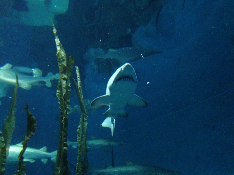 Shark in water Aquarium Beauty In Nature Blue Close-up Day Nature No People Outdoors Shark Tranquility Water