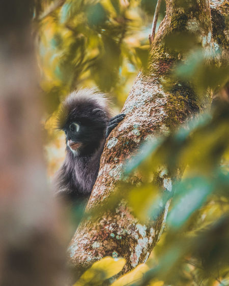 Dusky Leaf Monkey Animal Themes Animal Monkey Primate Looking Away Low Angle View Animal Wildlife Animals In The Wild One Animal