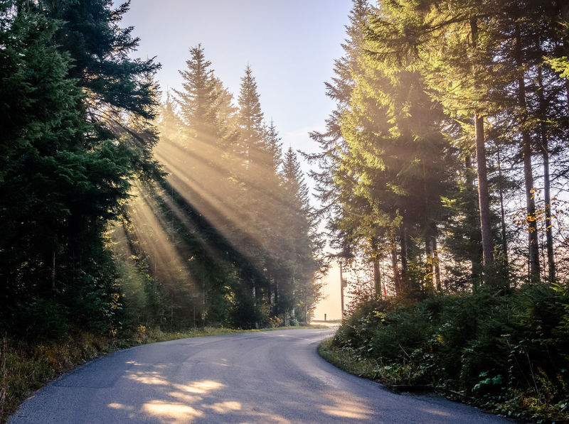 Beauty In Nature Day Fog Forest Landscape Nature No People Outdoors Road Scenics Sky Street Sun Sunbeam Sunbeams Sunlight The Way Forward Tree