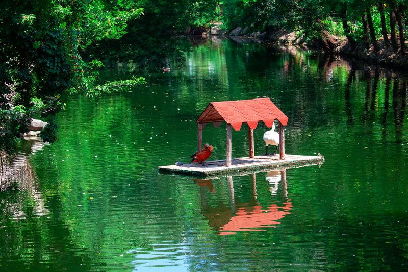 Lifeguard hut floating on lake