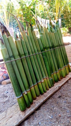 Food of lemang using bamboo Cooking Close-up Freshness Food And Drink Ready-to-eat Bamboo Sweet Cook  Day Bamboo - Plant Tree Nature Green Color in my