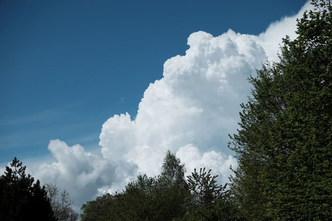 Clouds seen at a park Beauty In Nature Blue Sky Day Nature Outdoors Scenics Sky Tranquility