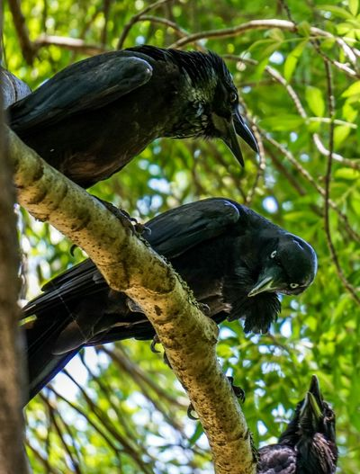 A6000 Nature Wildlife Birds Wildbird Sony A6000 Eyes