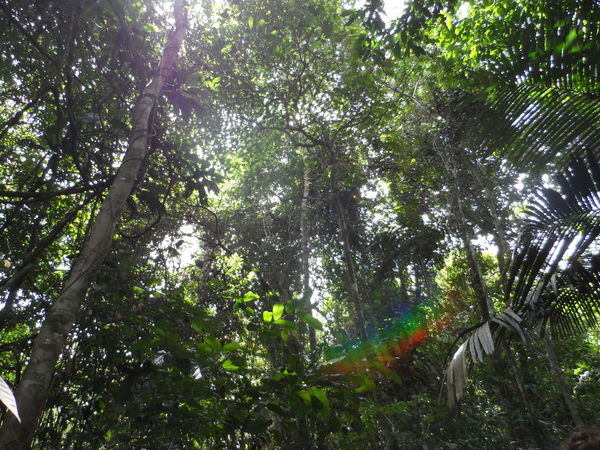 #rainforest Beauty In Nature Green Color Nature No People Outdoors Rainbow Suriname Tree