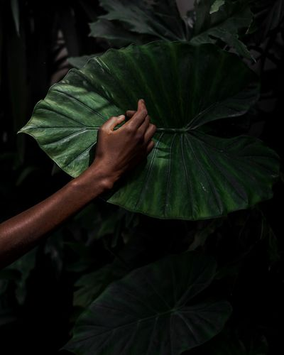 Cropped hand of person touching monstera leaf in forest