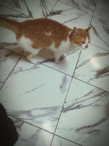 Cutty Cat