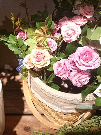 Roses of shops…