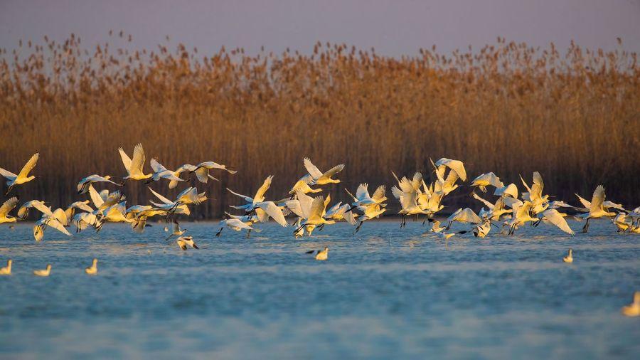 View of birds in water