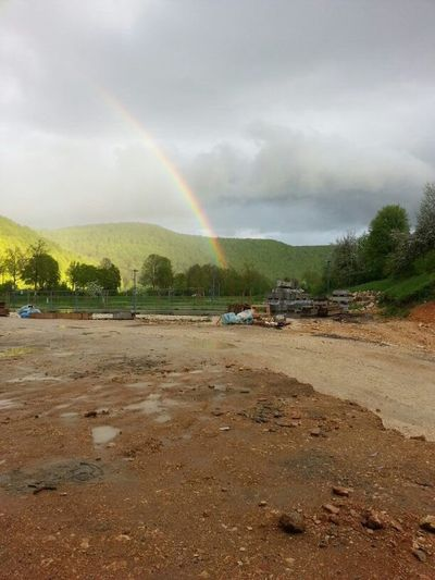 Rainbow Pod Of Gold Tree Storm