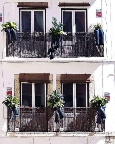 The Street Photographer - 2017 EyeEm Awards Building Exterior Window Clothes Reciclyng Balcony Jeans Plants Instagramer Umeugram Lisbon - Portugal