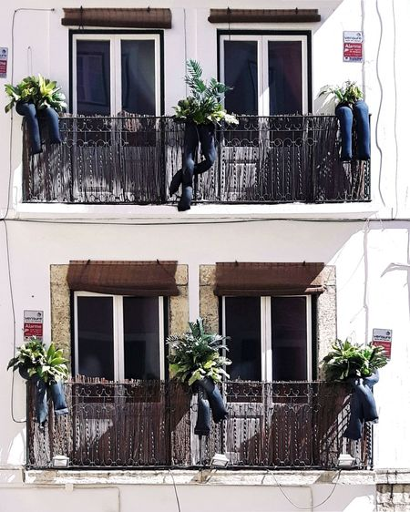 View of potted plants on balcony